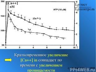 Кратковременное увеличение [Ca++] in совпадает по времени с увеличением проницае