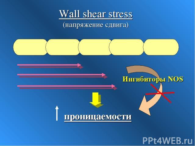 Wall shear stress (напряжение сдвига) Ингибиторы NOS