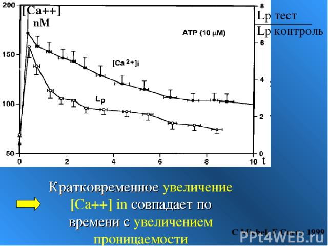 Кратковременное увеличение [Ca++] in совпадает по времени с увеличением проницаемости С Michel, F Curry 1999