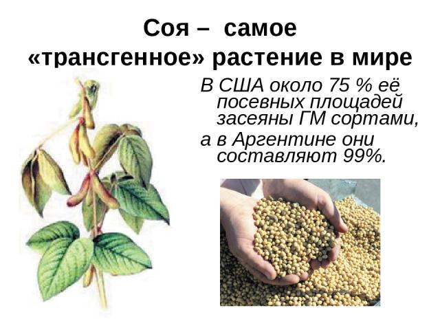 Соя – самое «трансгенное» растение в мире В США около 75 % её посевных площадей засеяны ГМ сортами, а в Аргентине они составляют 99%.
