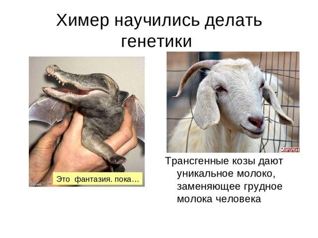 Химер научились делать генетики Трансгенные козы дают уникальное молоко, заменяющее грудное молока человека Это фантазия. пока…
