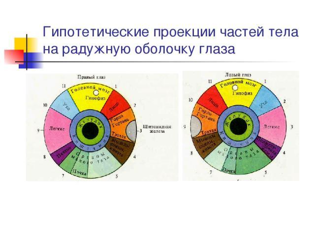 Гипотетические проекции частей тела на радужную оболочку глаза