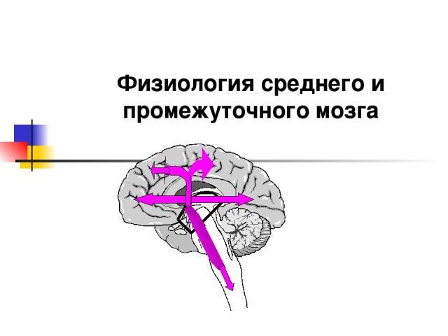 Физиология среднего и промежуточного мозга
