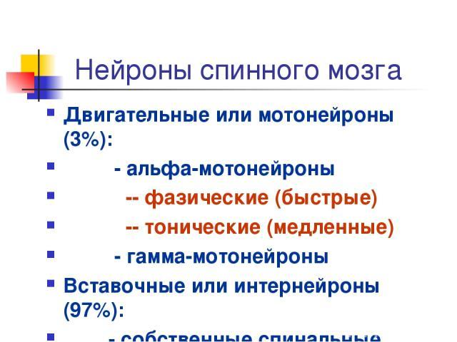 Нейроны спинного мозга Двигательные или мотонейроны (3%): - альфа-мотонейроны -- фазические (быстрые) -- тонические (медленные) - гамма-мотонейроны Вставочные или интернейроны (97%): - собственные спинальные - проекционные