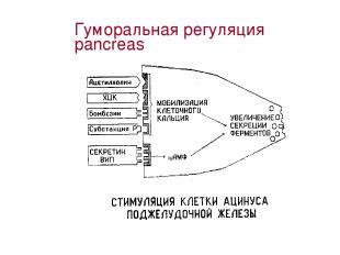 Гуморальная регуляция pancreas