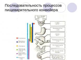Последовательность процессов пищеварительного конвейера