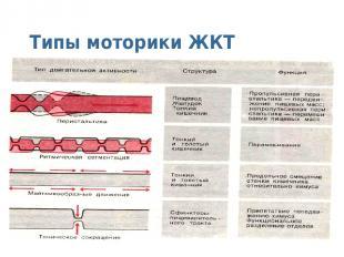 Типы моторики ЖКТ