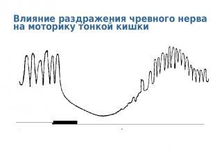 Влияние раздражения чревного нерва на моторику тонкой кишки