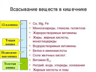 Всасывание веществ в кишечнике Ca, Mg, Fe Моносахариды, глюкоза, галактоза Жирор