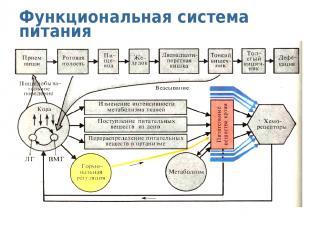 Функциональная система питания