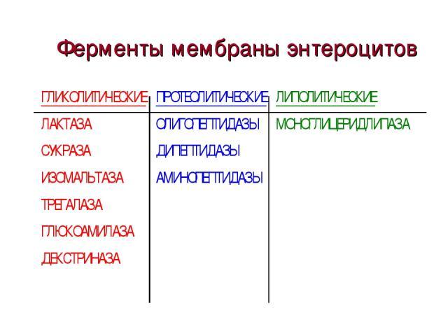 Ферменты мембраны энтероцитов