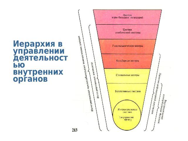 Иерархия в управлении деятельностью внутренних органов