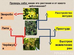 Проверь себя: какие это растения и от какого заболевания? Быстрое заживление ран