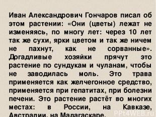 Иван Александрович Гончаров писал об этом растении: «Они (цветы) лежат не изменя