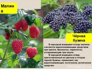 Чёрная бузина Малина В народной медицине плоды малины считаются жаропонижающим с