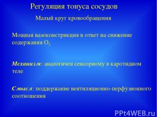 Регуляция тонуса сосудов Малый круг кровообращения Мощная вазоконстрикция в отве