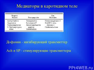 Медиаторы в каротидном теле Дофамин - ингибирующий трансмиттер Ach и SP - стимул