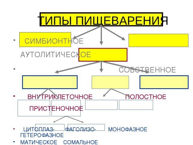 ТИПЫ ПИЩЕВАРЕНИЯ СИМБИОНТНОЕ АУТОЛИТИЧЕСКОЕ СОБСТВЕННОЕ ВНУТРИКЛЕТОЧНОЕ ПОЛОСТНОЕ ПРИСТЕНОЧНОЕ ЦИТОПЛАЗ- ФАГОЛИЗО- МОНОФАЗНОЕ ГЕТЕРОФАЗНОЕ МАТИЧЕСКОЕ СОМАЛЬНОЕ ПОЛОСТНОЕ ПРИСТЕНОЧНОЕ