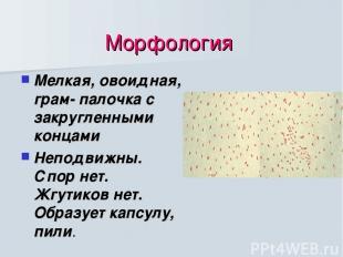 Морфология Мелкая, овоидная, грам- палочка с закругленными концами Неподвижны. С
