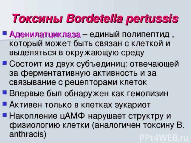 Токсины Bordetella pertussis Аденилатциклаза – единый полипептид , который может быть связан с клеткой и выделяться в окружающую среду Состоит из двух субъединиц: отвечающей за ферментативную активность и за связывание с рецепторами клеток Впервые б…