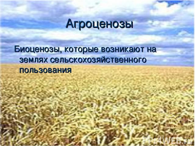 Агроценозы Биоценозы, которые возникают на землях сельскохозяйственного пользования