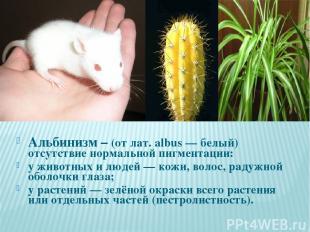 Альбинизм – (от лат. albus — белый) отсутствие нормальной пигментации: у животны