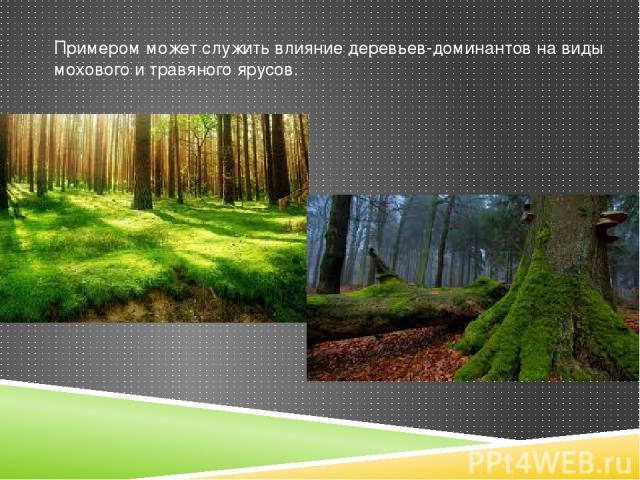 Примером может служить влияние деревьев-доминантов на виды мохового и травяного ярусов.