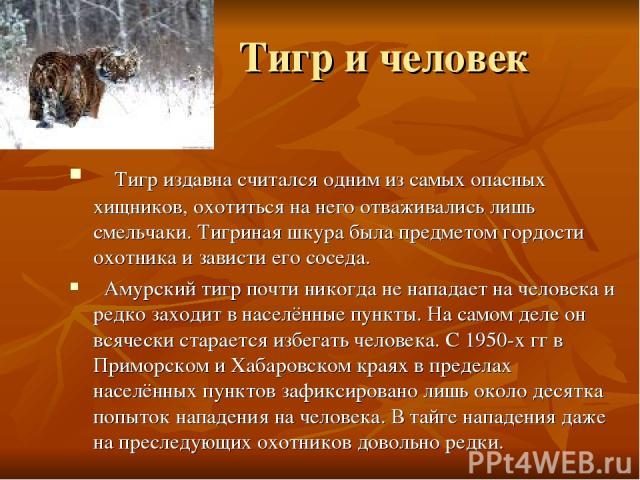 Тигр и человек Тигр издавна считался одним из самых опасных хищников, охотиться на него отваживались лишь смельчаки. Тигриная шкура была предметом гордости охотника и зависти его соседа. Амурский тигр почти никогда не нападает на человека и редко за…