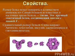 Свойства. Размер белка может измеряться количеством аминокислот Самый большой из