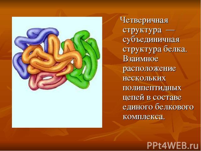Четверичная структура — субъединичная структура белка. Взаимное расположение нескольких полипептидных цепей в составе единого белкового комплекса.
