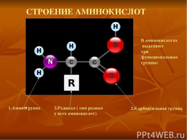 СТРОЕНИЕ АМИНОКИСЛОТ В аминокислотах выделяют три функциональные группы: 1.Аминогруппа 2.Карбоксильная группа 3.Радикал ( они разные у всех аминокислот)