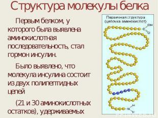 Структура молекулы белка Первым белком, у которого была выявлена аминокислотная