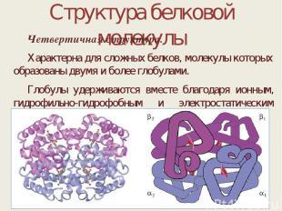 Структура белковой молекулы Четвертичная структура. Характерна для сложных белко