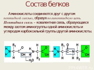 Состав белков Аминокислоты соединяются друг с другом пептидной связью, образуя п