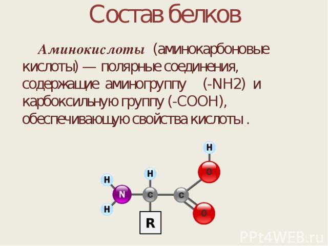 Состав белков Аминокислоты (аминокарбоновые кислоты) — полярные соединения, содержащие аминогруппу (-NH2) и карбоксильную группу (-COOH), обеспечивающую свойства кислоты .