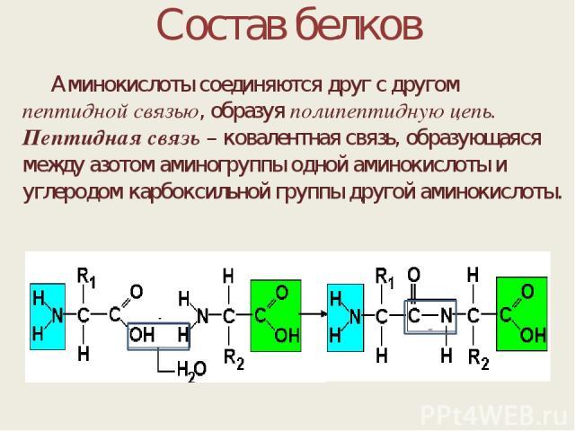 Состав белков Аминокислоты соединяются друг с другом пептидной связью, образуя полипептидную цепь. Пептидная связь – ковалентная связь, образующаяся между азотом аминогруппы одной аминокислоты и углеродом карбоксильной группы другой аминокислоты.