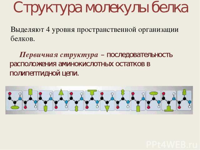 Структура молекулы белка Первичная структура – последовательность расположения аминокислотных остатков в полипептидной цепи. Выделяют 4 уровня пространственной организации белков.
