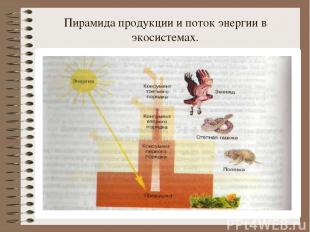 Пирамида продукции и поток энергии в экосистемах.