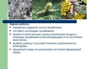 Задачи работы: определить видовой состав лишайников; составить коллекцию лишайни