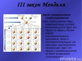 III закон Менделя Закон независимого комбинирования: «при скрещивании двух гомоз