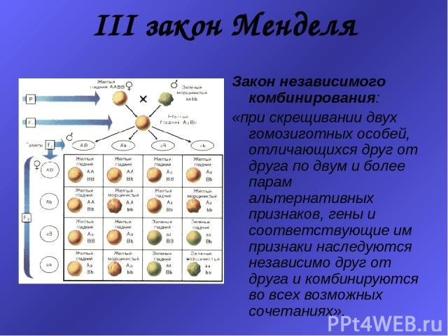 III закон Менделя Закон независимого комбинирования: «при скрещивании двух гомозиготных особей, отличающихся друг от друга по двум и более парам альтернативных признаков, гены и соответствующие им признаки наследуются независимо друг от друга и комб…