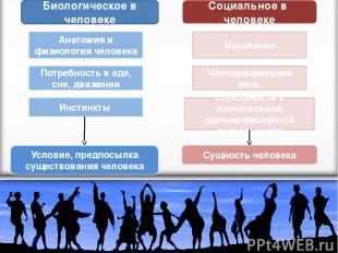 Биологическое в человеке Социальное в человеке Анатомия и физиология человека По