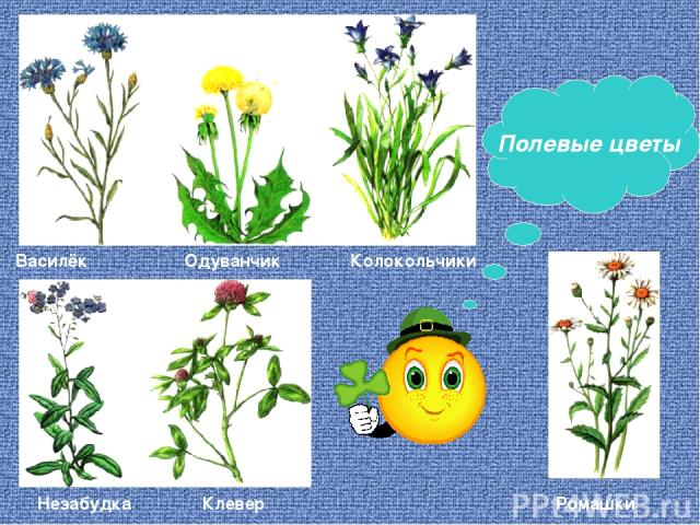 Василёк Одуванчик Колокольчики Незабудка Клевер Ромашки Полевые цветы