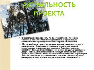В настоящее время работы по восстановлению лесов на бросовых землях силами госуд
