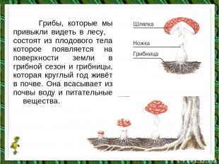 Грибы, которые мы привыкли видеть в лесу, состоят из плодового тела которое появ