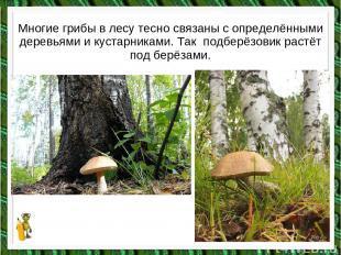 Многие грибы в лесу тесно связаны с определёнными деревьями и кустарниками. Так