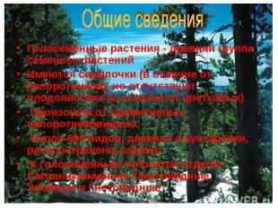 Голосеменные растения - древняя группа семенных растений Имеются семяпочки (в от