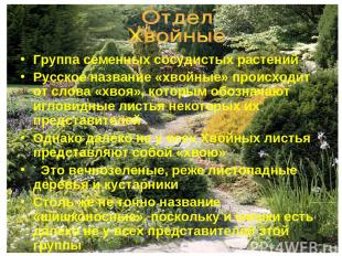 Группа семенных сосудистых растений Русское название «хвойные» происходит от сло