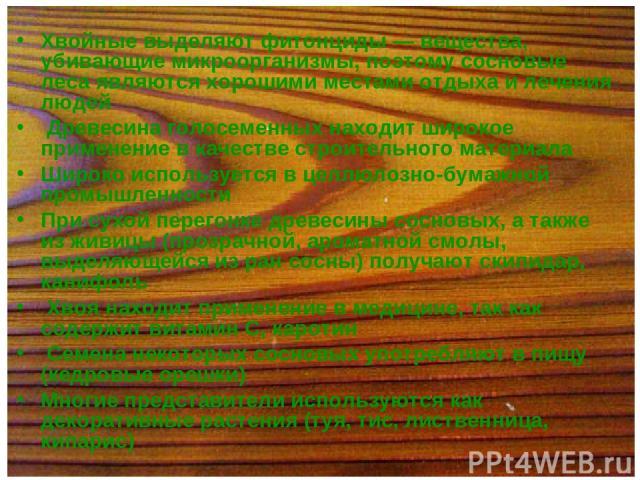 Хвойные выделяют фитонциды — вещества, убивающие микроорганизмы, поэтому сосновые леса являются хорошими местами отдыха и лечения людей Древесина голосеменных находит широкое применение в качестве строительного материала Широко используется в целлюл…
