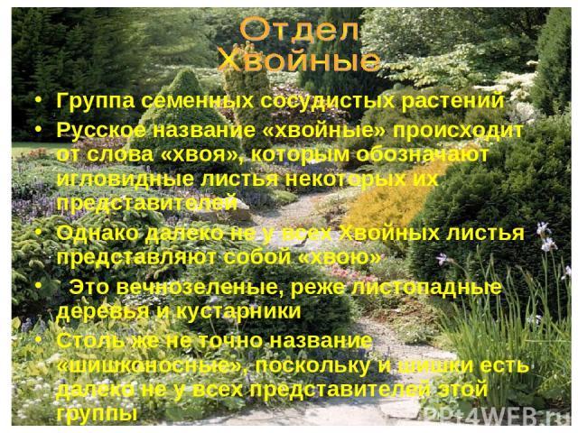 Группа семенных сосудистых растений Русское название «хвойные» происходит от слова «хвоя», которым обозначают игловидные листья некоторых их представителей Однако далеко не у всех Хвойных листья представляют собой «хвою» Это вечнозеленые, реже листо…